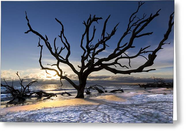 Driftwood Beach at Dawn Greeting Card by Debra and Dave Vanderlaan