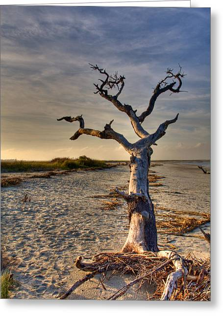 Driftwood Beach Greeting Cards - Driftwood  Greeting Card by Drew Castelhano