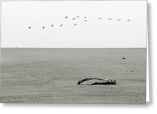 Driftwood Beach Greeting Cards - Driftwood Log and Birds - A Gray Day On The Beach Greeting Card by Christine Till