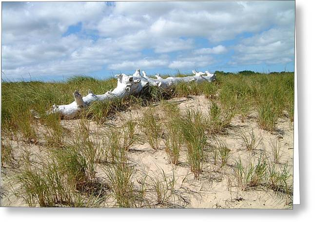 Cape Cod Mass Greeting Cards - Driftwood Logs Journey Over Greeting Card by Sven Migot