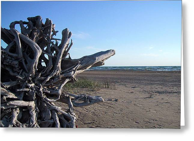 Ontario Greeting Cards - Driftwood Roots Greeting Card by Merv Scoble
