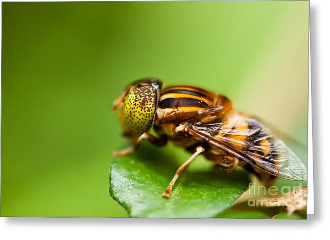 Australia Greeting Cards - Drone fly Greeting Card by Johan Larson