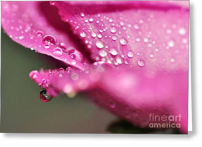 Wet Petals Greeting Cards - Droplet on Rose Petal Greeting Card by Kaye Menner
