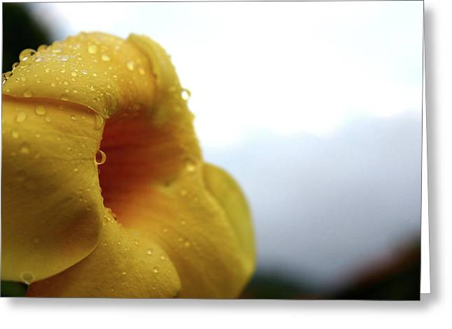 Frederico Borges Photographs Greeting Cards - Droplets Greeting Card by Frederico Borges