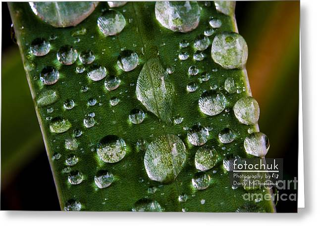 Green Transparency Greeting Cards - Droplets resting on a Leaf Greeting Card by Darcy Michaelchuk