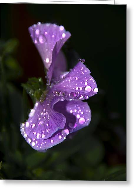 Fresh Green Greeting Cards - Drops of Rain Greeting Card by Svetlana Sewell