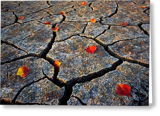 Mud Season Greeting Cards - Dry Autumn Greeting Card by Mike Norton