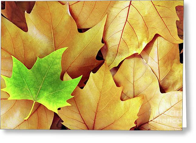 Dry Fall Leaves Greeting Card by Carlos Caetano