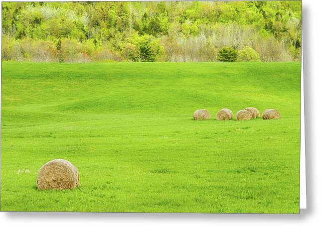 Maine Spring Greeting Cards - Dry Hay Bales In Spring Farm Field Maine Photo Greeting Card by Keith Webber Jr