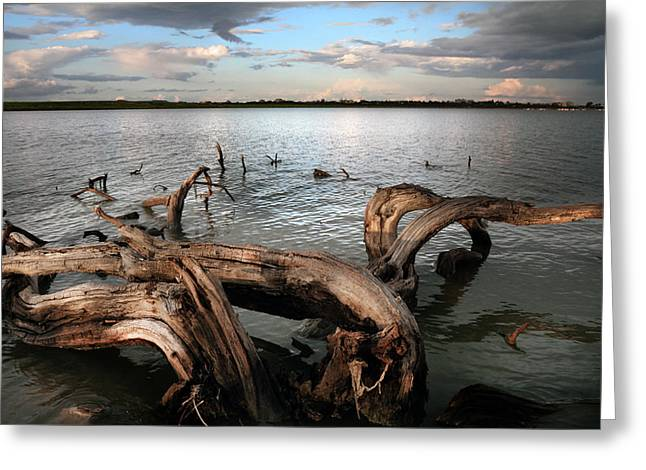 Desert Lake Greeting Cards - Dry Log In A Lake Greeting Card by Stylianos Kleanthous