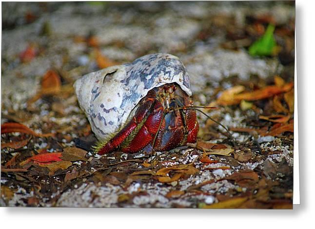 Dry Tortugas Greeting Cards - Dry Tortuga Hermit Crab Greeting Card by Henri Irizarri