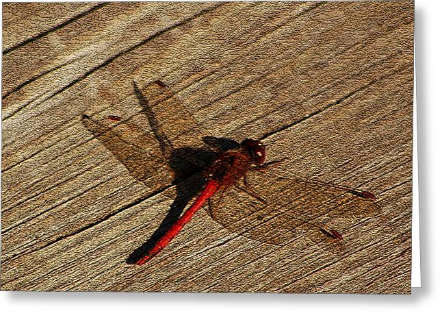 Nature Center Pond Greeting Cards - Drying Red  Dragon Fly Greeting Card by LeeAnn McLaneGoetz McLaneGoetzStudioLLCcom