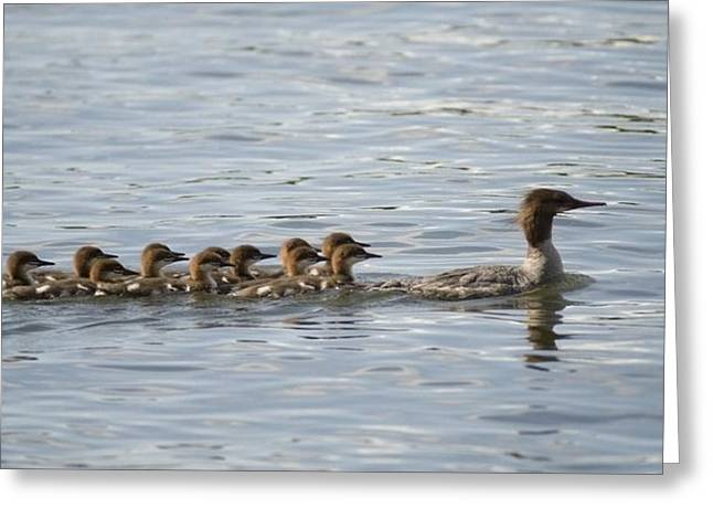 Duck And Ducklings Swimming In A Row Greeting Card by Keith Levit