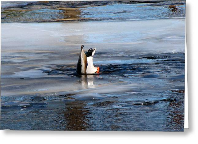 Duck Framed Prints Greeting Cards - Duck In The Ice Greeting Card by Ms Judi