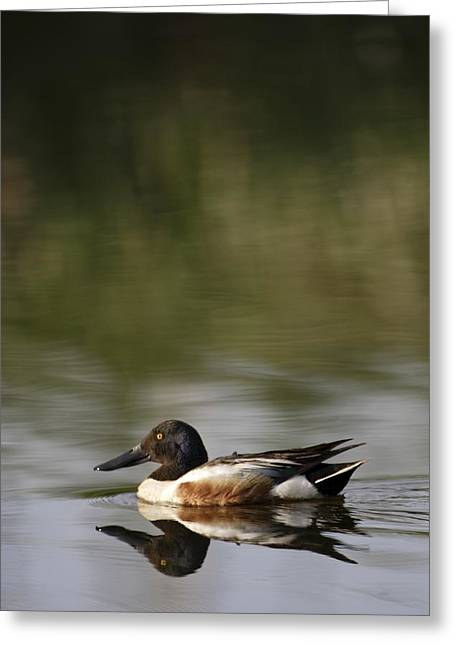 Dredge Greeting Cards - Duck On Water Greeting Card by Richard Wear