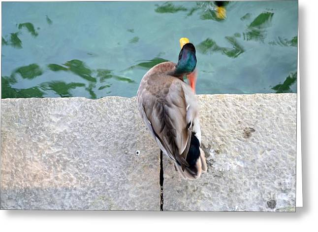 Ducklings Mixed Media Greeting Cards - Duck Scratching Greeting Card by Kathleen Pio