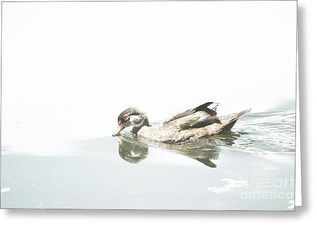 Duck Framed Prints Greeting Cards - Duck Waters Greeting Card by Andrea Hazel Ihlefeld