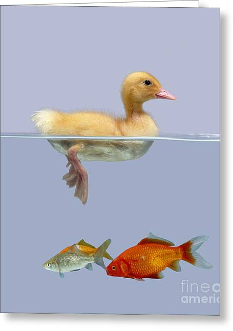 Domesticated Animal Greeting Cards - Duckling And Goldfish Greeting Card by Jane Burton