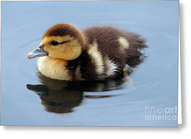 Ducklings Greeting Cards - Duckling Greeting Card by Jeannie Burleson