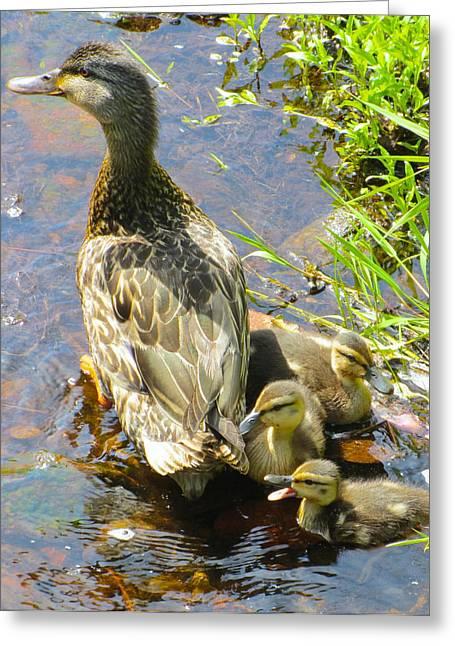 Ducklings Greeting Card by Sarah Gayle Carter