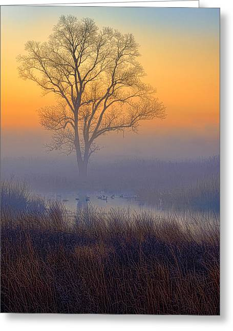 Ducks At Sunrise Greeting Card by Jay Sheinfield