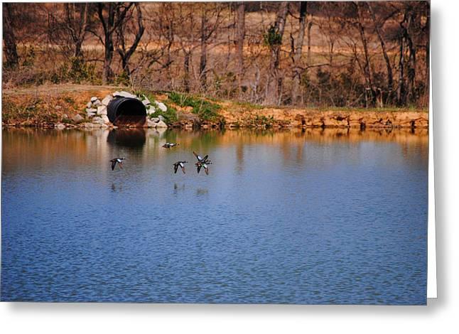 Flocks Of Ducks Greeting Cards - Ducks Flying Over Pond I Greeting Card by Jai Johnson