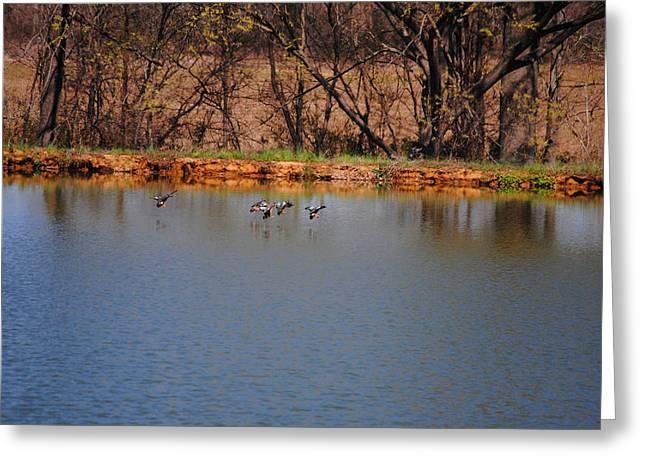 Flocks Of Ducks Greeting Cards - Ducks Flying Over Pond II Greeting Card by Jai Johnson