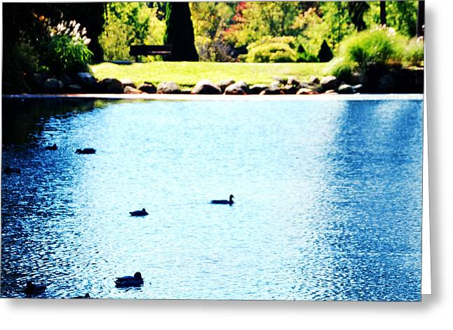 Blue Green Water Greeting Cards - Ducks Greeting Card by HD Connelly
