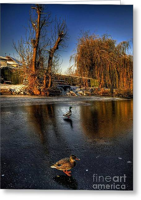 Duck Framed Prints Greeting Cards - Ducks On Ice Greeting Card by Yhun Suarez