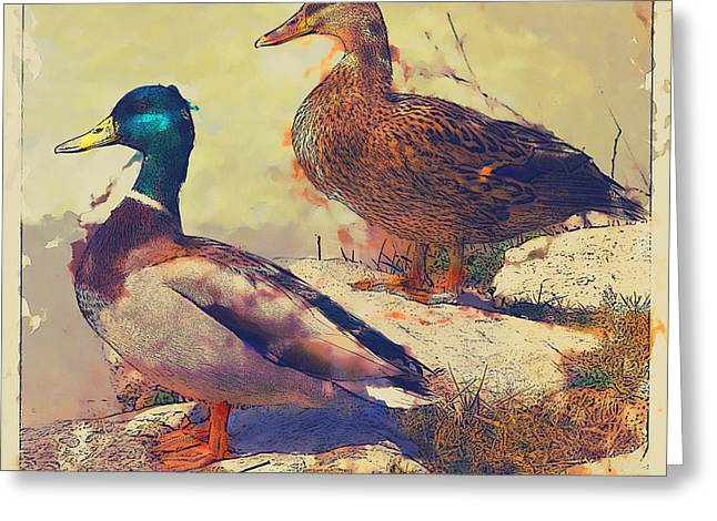Flying Animal Greeting Cards - Ducks On The Shore Greeting Card by David G Paul