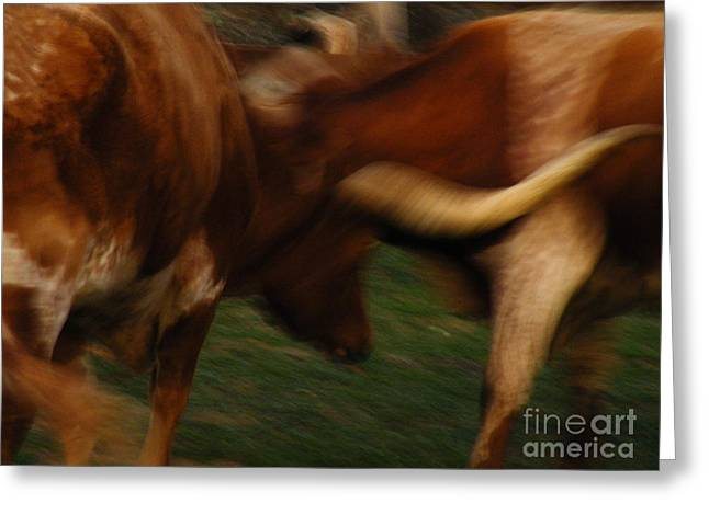 Cows Framed Prints Greeting Cards - Duel At Dusk Greeting Card by Joe Jake Pratt
