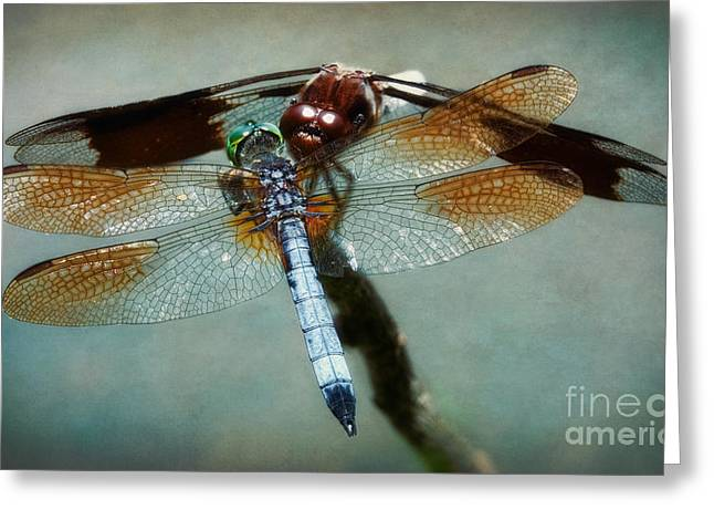 Dueling Dragonflies Greeting Card by Susan Isakson