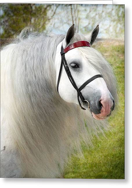 Gypsy Horse Greeting Cards - Dunbrody Greeting Card by Fran J Scott
