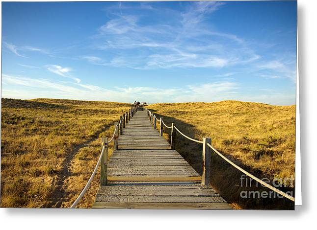 Silica Greeting Cards - Dune Walkway Greeting Card by Carlos Caetano