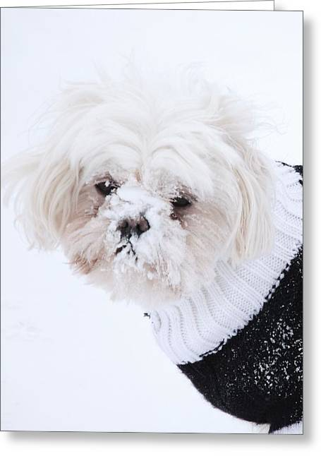 Dogs In Snow. Greeting Cards - Dunked Greeting Card by Lisa  DiFruscio