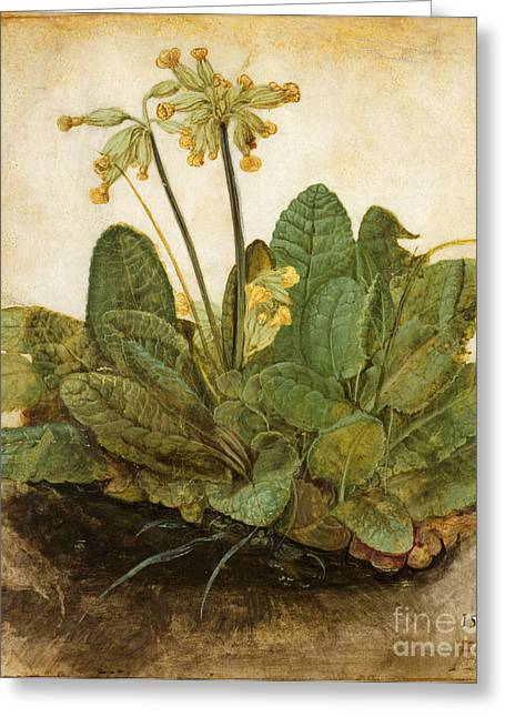 Gouache Photographs Greeting Cards - Durer Tuft Of Cowslips Greeting Card by Granger