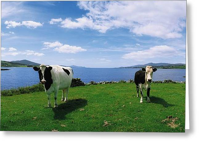 Full Body Greeting Cards - Durrus, Sheeps Head, Co Cork, Ireland Greeting Card by The Irish Image Collection