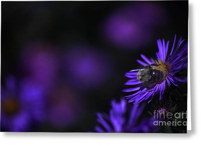 Aster Digital Art Greeting Cards - Dusk Engulfs A Last Meal Greeting Card by The Stone Age