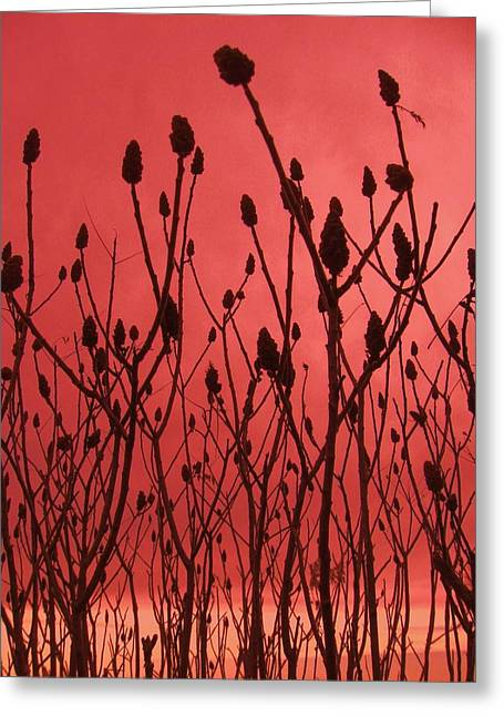 Dusk Greeting Card by Todd Sherlock