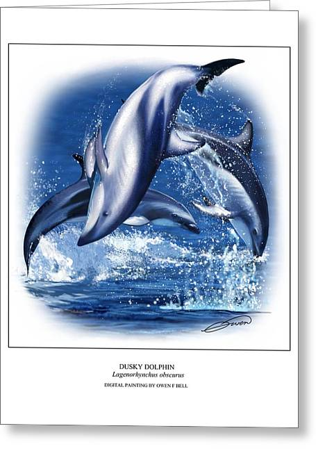 Ocean Mammals Greeting Cards - Dusky Dolphin Greeting Card by Owen Bell