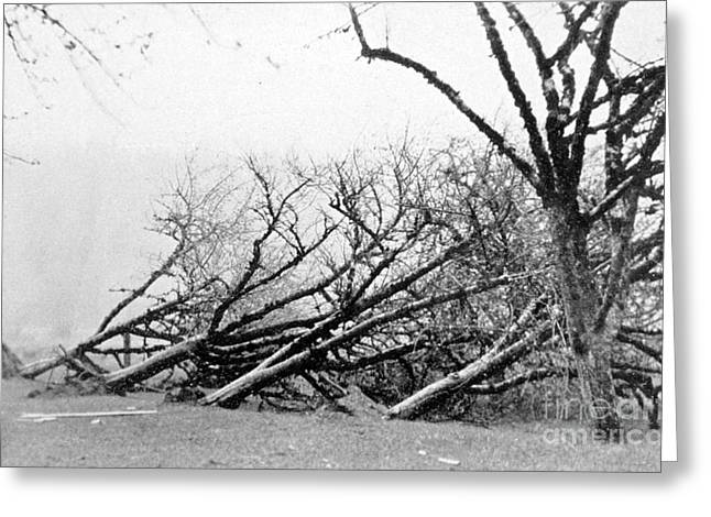 Uproot Greeting Cards - Dust Storm Damage, 1931 Greeting Card by Science Source