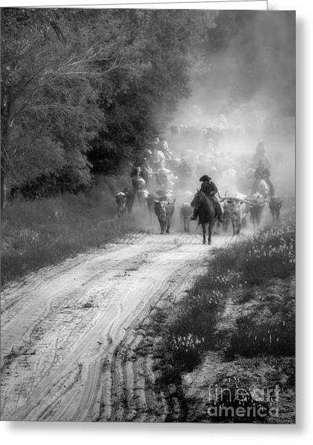 Steer Greeting Cards - Dusty Trail Greeting Card by Fred Lassmann