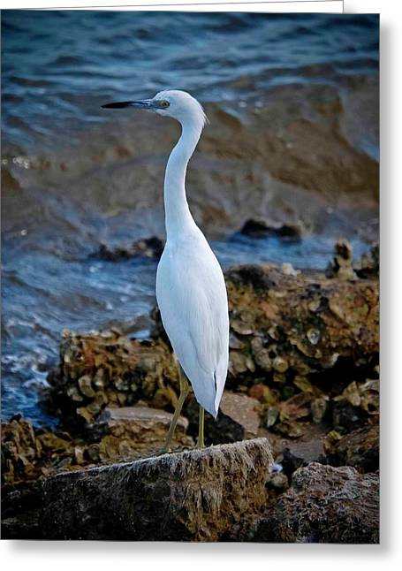 Vicky Browning Greeting Cards - Eager Egret Greeting Card by DigiArt Diaries by Vicky B Fuller