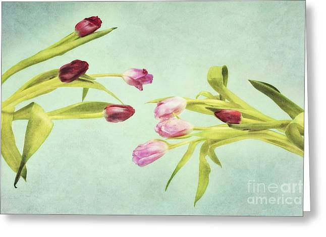 Pink Prints Greeting Cards - Eager For Spring Greeting Card by Priska Wettstein