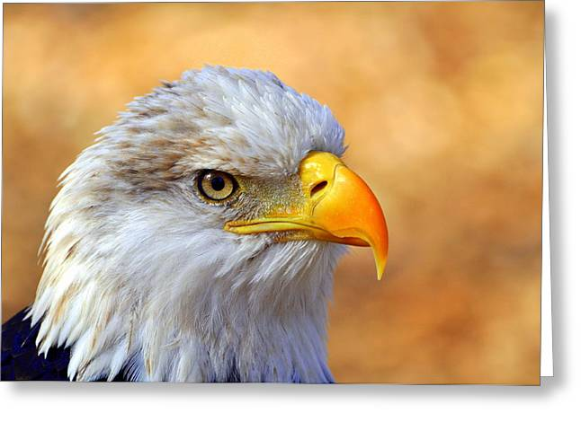Bald Eagles Greeting Cards - Eagle 7 Greeting Card by Marty Koch