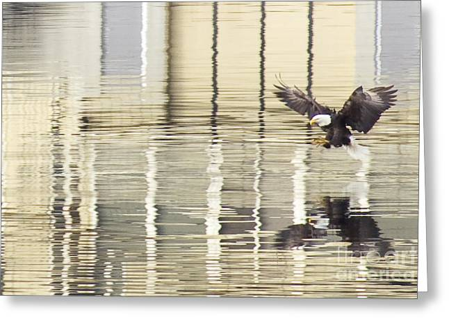 Swooping Greeting Cards - Eagle Abstract Greeting Card by Idaho Scenic Images Linda Lantzy