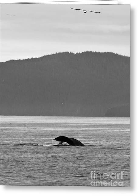 Whale Tail Greeting Cards - Eagle and the Whale Greeting Card by Darcy Michaelchuk