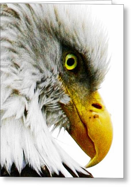 Icons Prints On Canvas Greeting Cards - Eagle Eye Greeting Card by Carrie OBrien Sibley