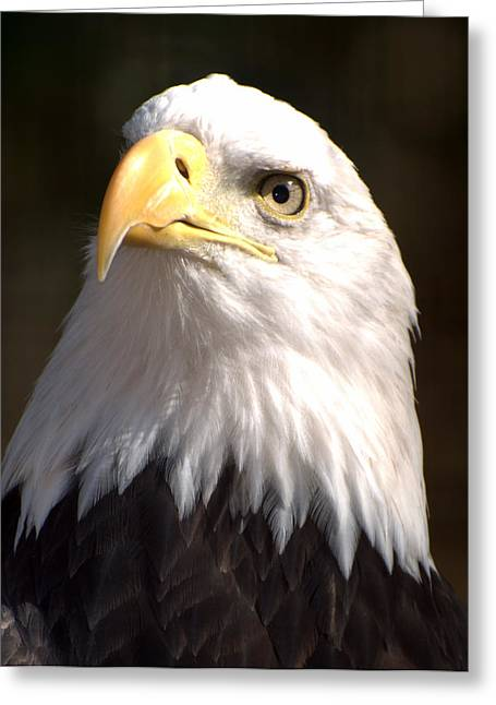 Eagle Eye Greeting Card by Marty Koch