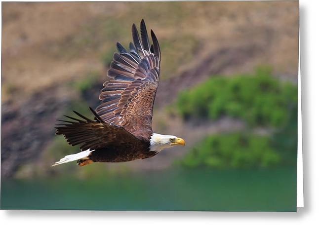 Spirit Bird Greeting Cards - Eagle In Flight Greeting Card by Beth Sargent
